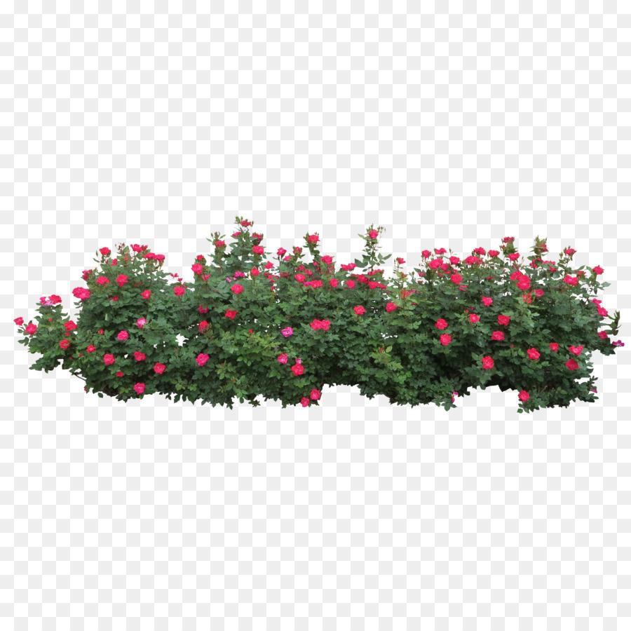 bush clipart shrub
