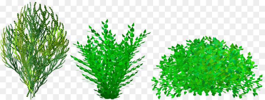 Bush clipart shrubbery. Shrub free content website