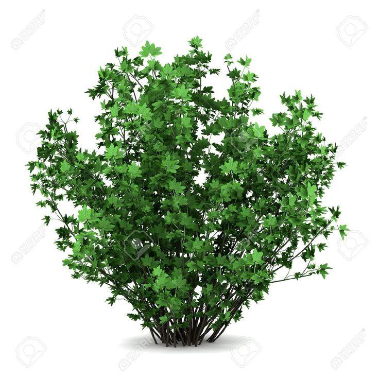 Bush clipart shrubbery.  best bushes shrubs