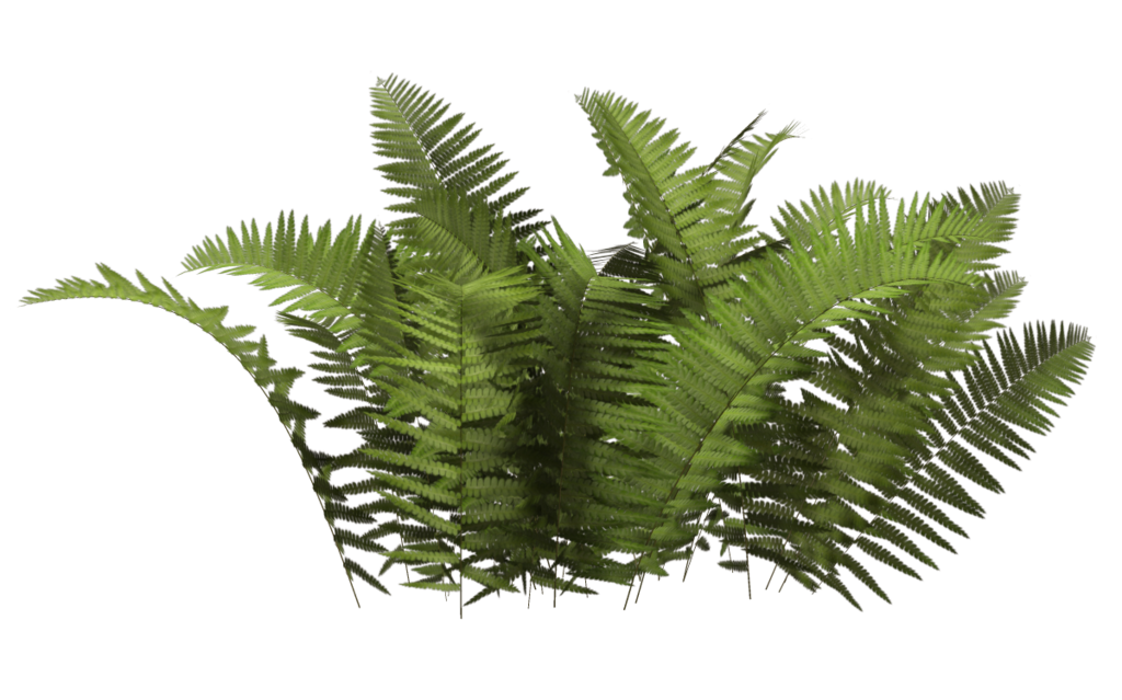 Download shrub bushes free. Hand clipart plant