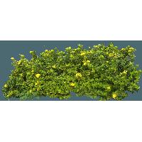Download bush free png. Bushes clipart raspberry