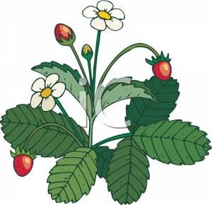 Plant with flowers royalty. Bush clipart strawberry