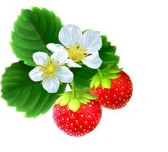 Bush clipart strawberry. Fields patch and main