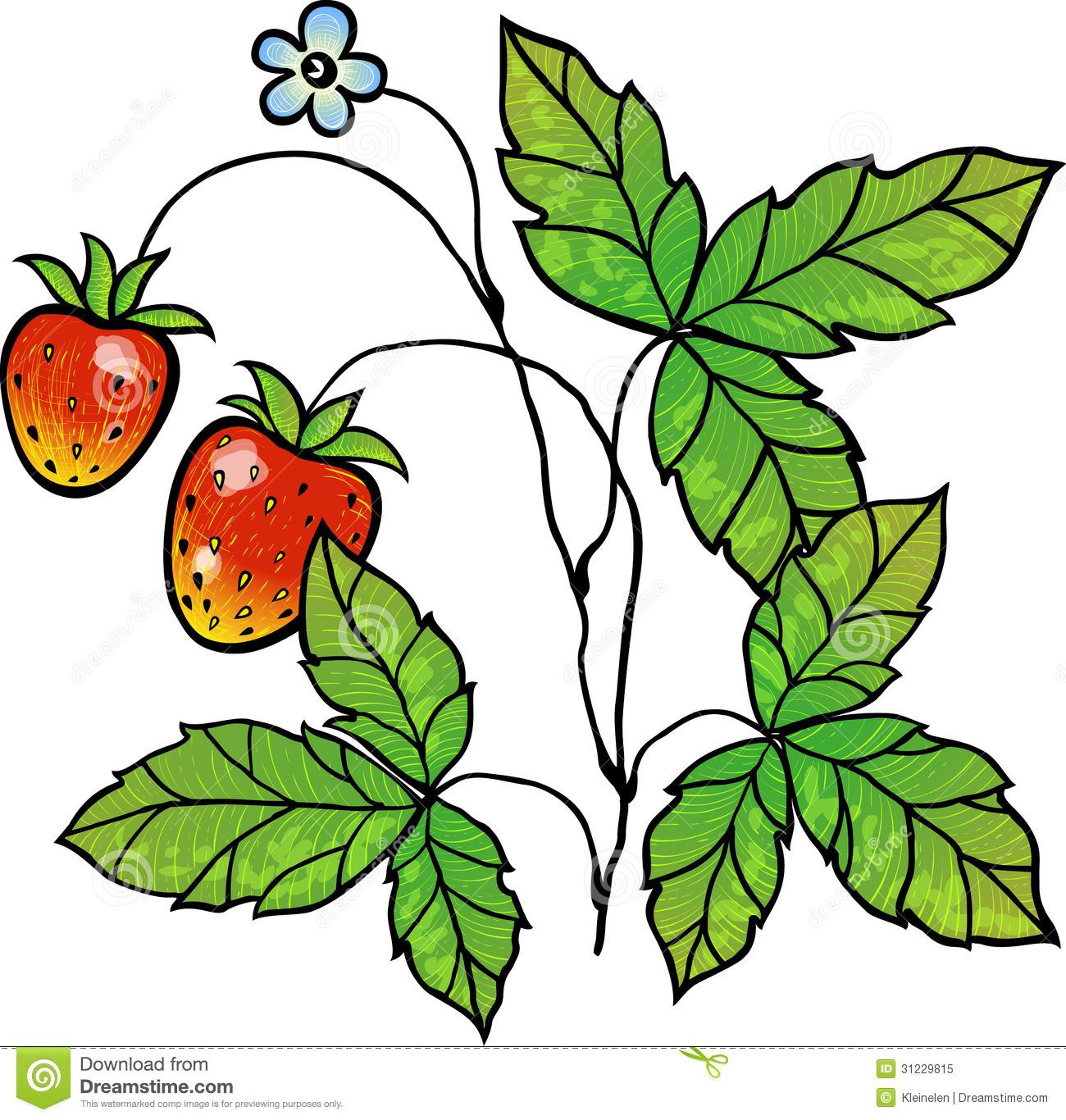 Strawberry icon free icons. Strawberries clipart bush