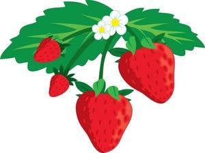Growing plant panda free. Bush clipart strawberry