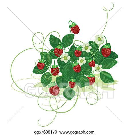 Vector illustration wood wild. Strawberries clipart bush