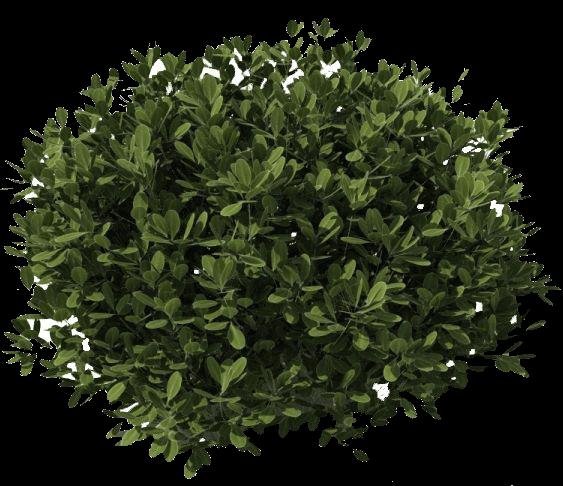 Dark green png stickpng. Bush clipart transparent background