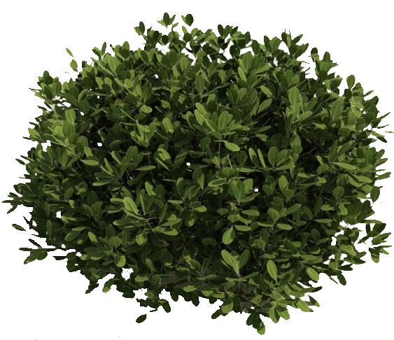 Image result for shrubs. Bushes clipart transparent background