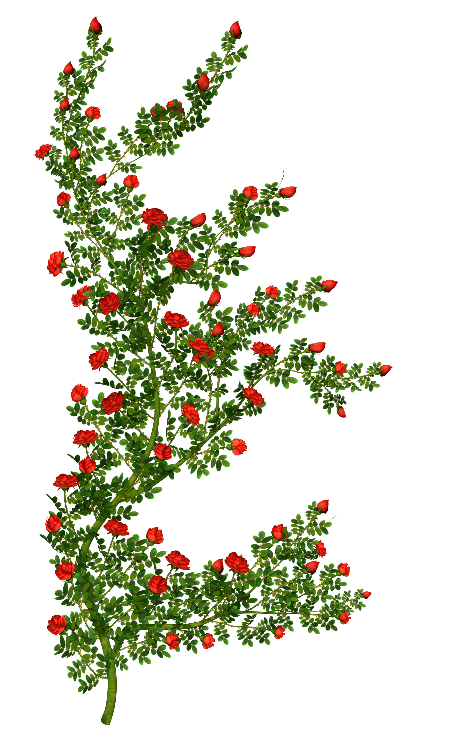 Rosebush picture gallery yopriceville. Bush clipart transparent flower