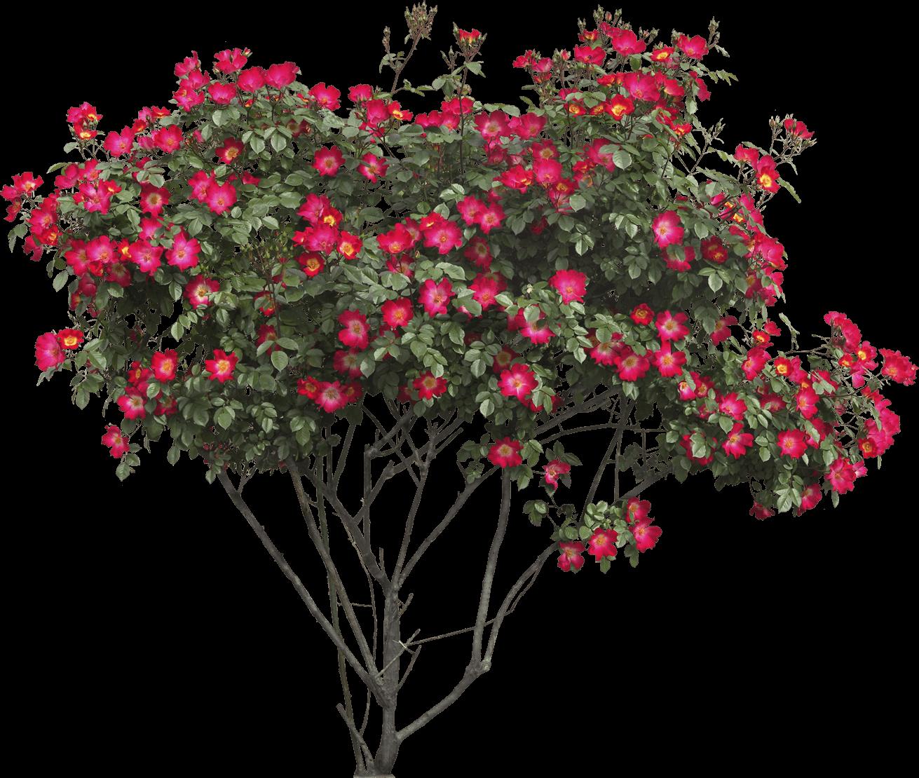 Red flowers png stickpng. Bush clipart transparent flower