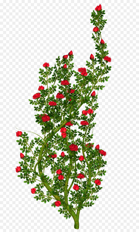Bush clipart transparent flower. Floral ornament rose clip