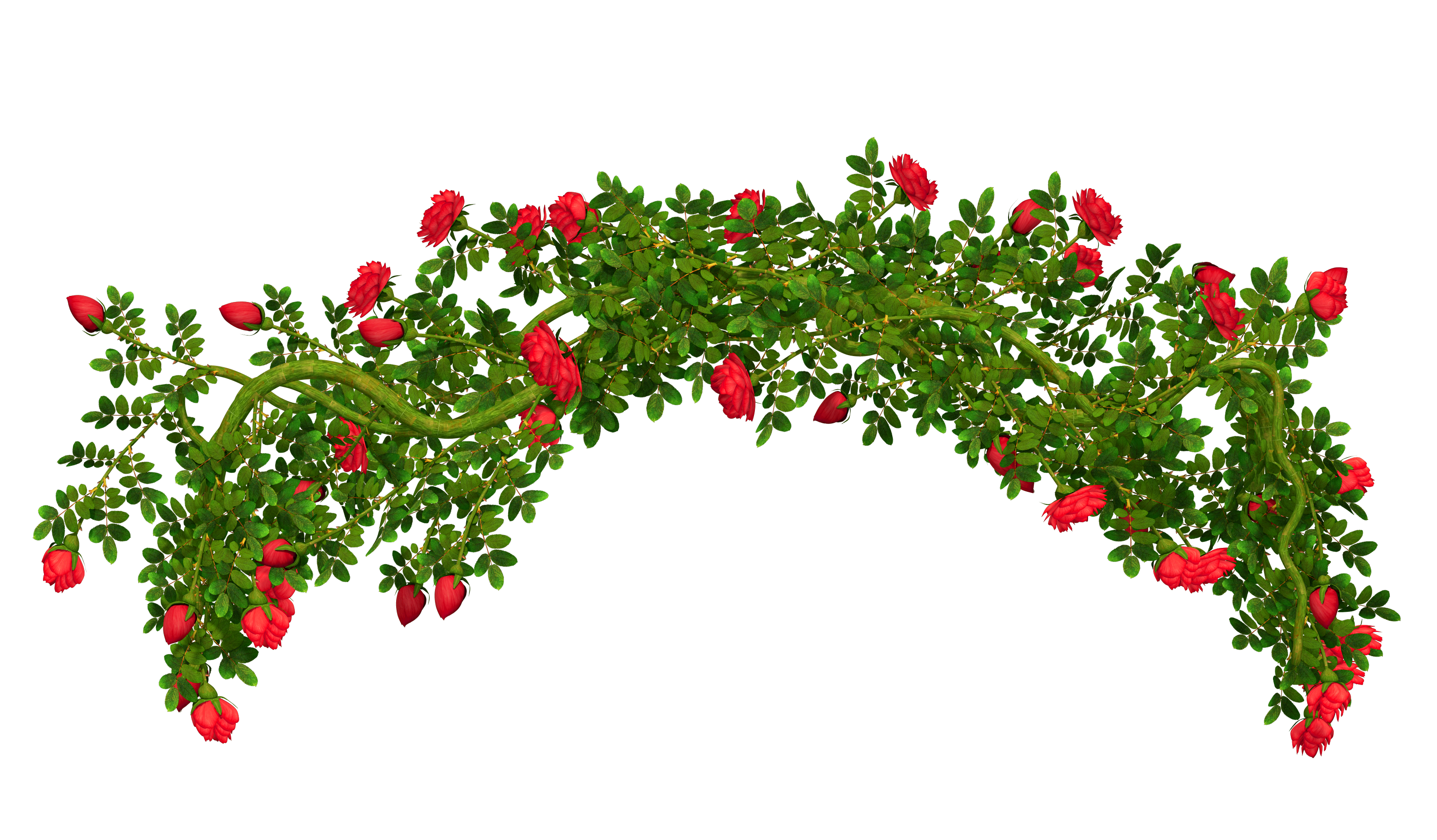 Garden clipart bush. Rosebush element png picture
