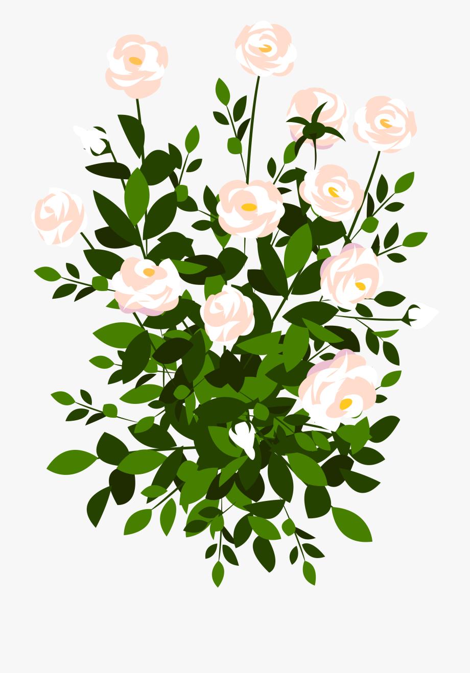 Bush clipart transparent flower. Whte png picture gallery