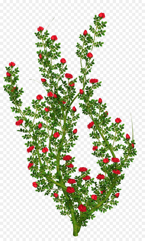Bush clipart transparent flower. Rose shrub clip art