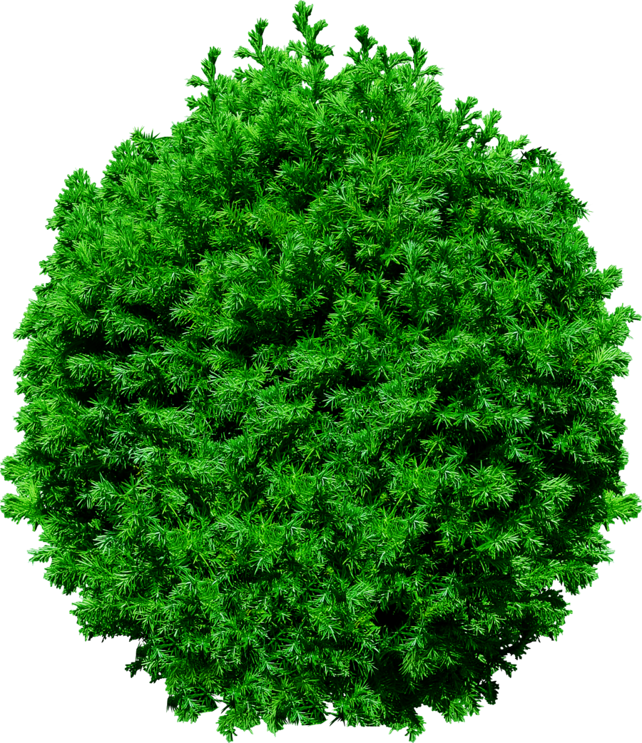View png files. Top tree transparent pictures