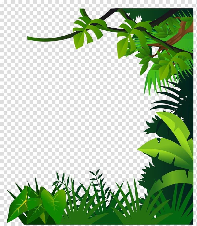 Green leafed plants illustration. Jungle clipart flora