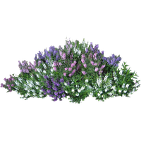 Bushes clipart berry. Download shrub free png
