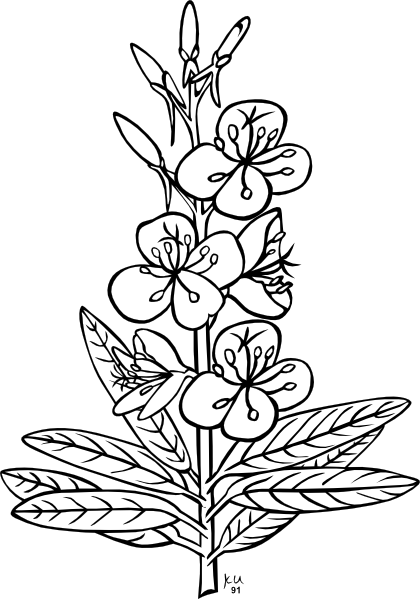 Plants station . Bushes clipart black and white