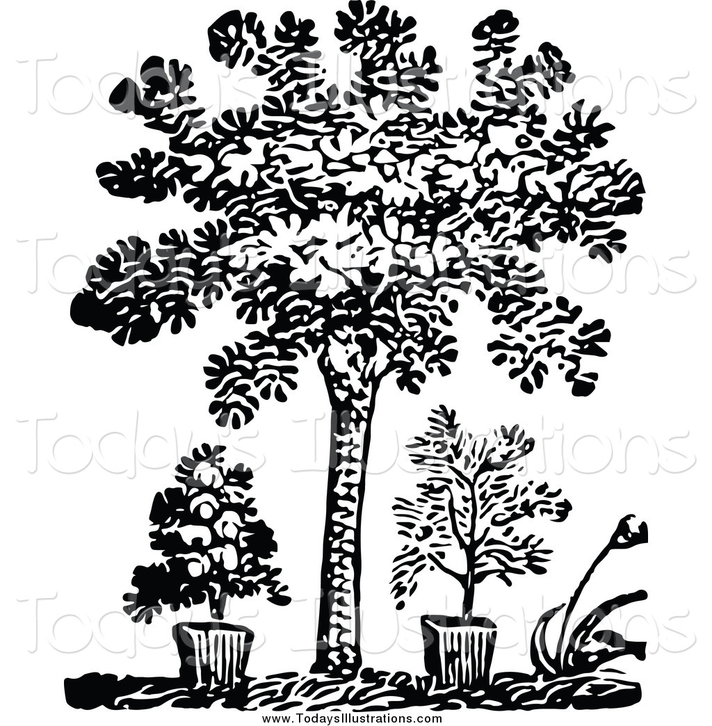 Bushes clipart black and white.  collection of plants