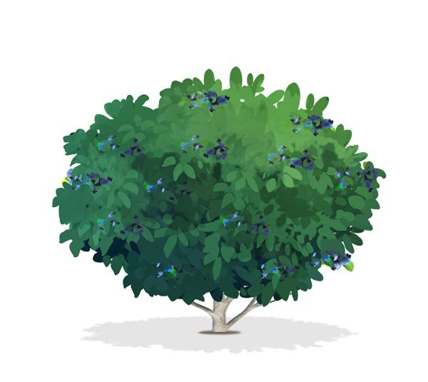 Bushes clipart blueberry. Bush drawing at paintingvalley