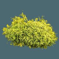 Bushes clipart chibi. Download bush free png