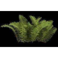 Download shrub free png. Bushes clipart chibi