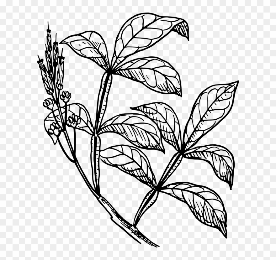 Stem plant shrub png. Bushes clipart drawing