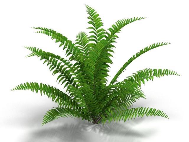 Free download clip art. Bushes clipart fern