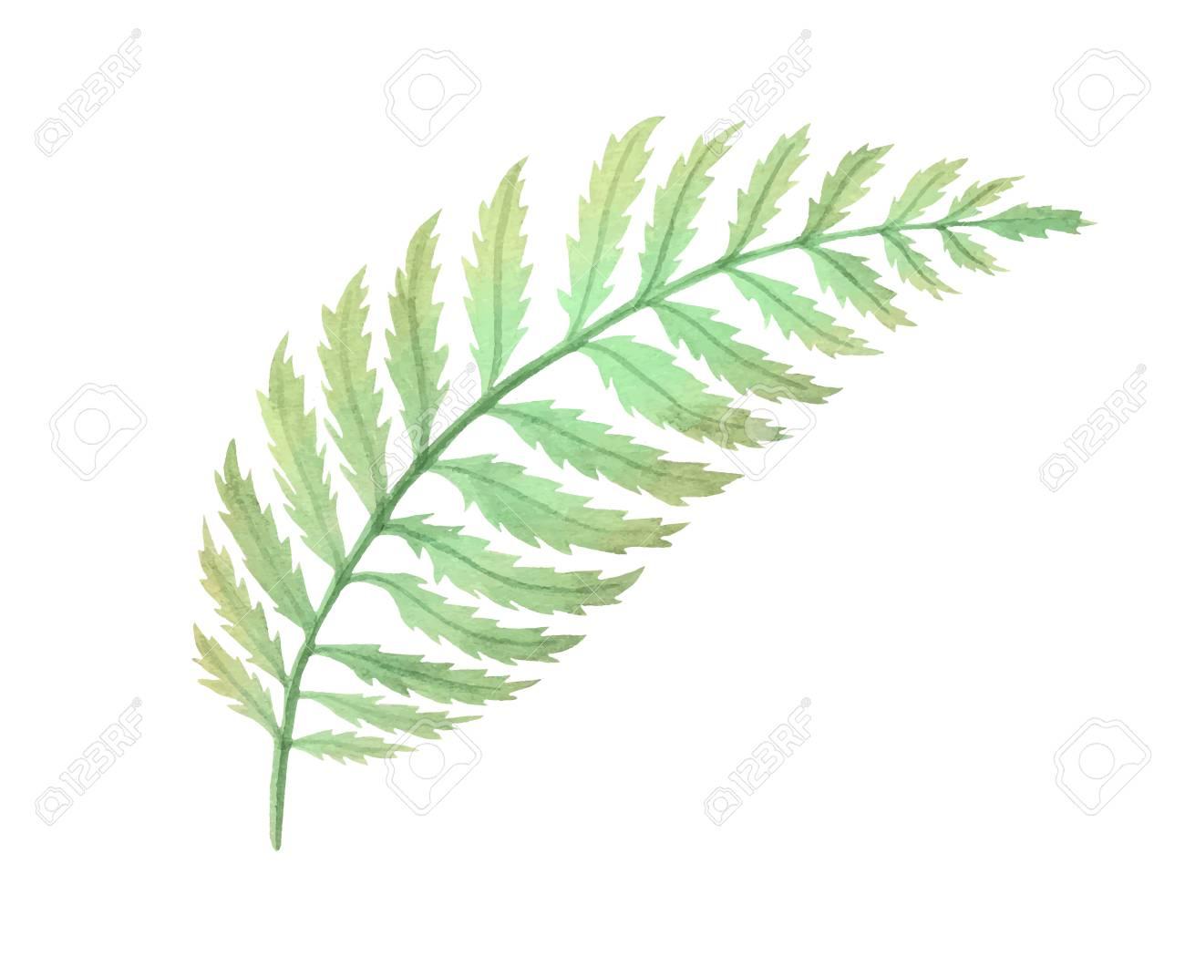 Bushes clipart fern. Free bush download clip