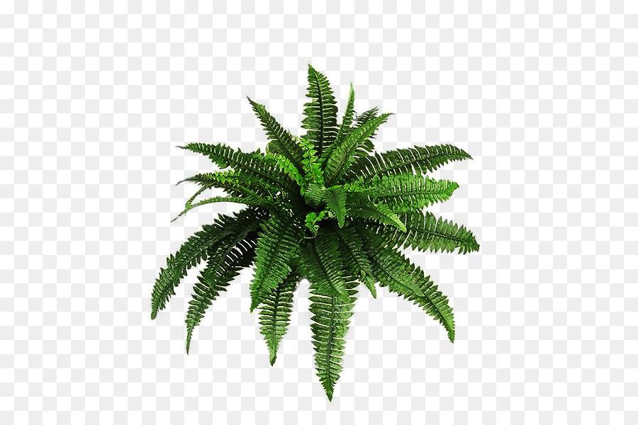 Plant shrub clip art. Bushes clipart fern