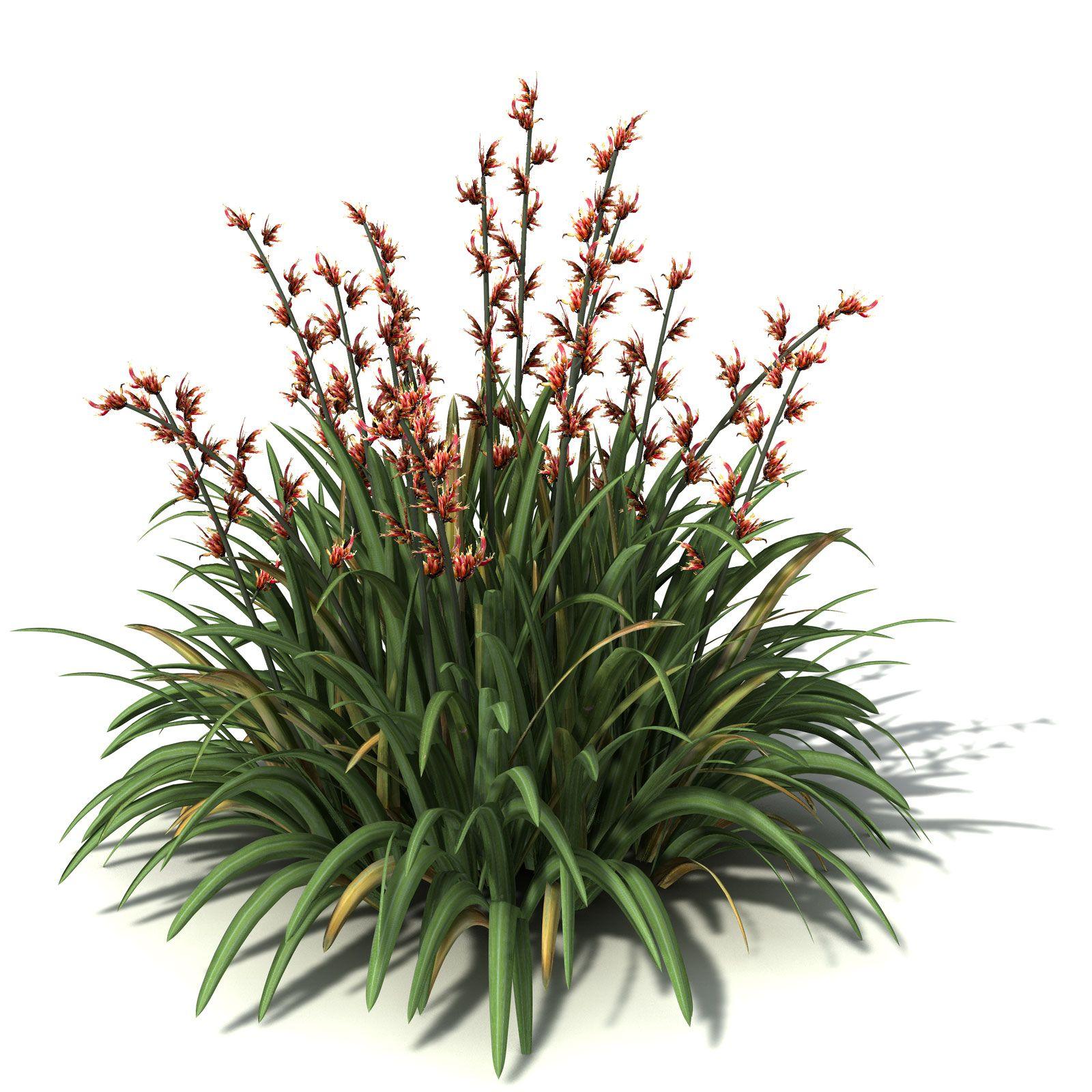 New zealand d graphics. Bush clipart flax