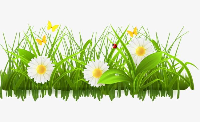 Bushes clipart flower. Green flowers png botany