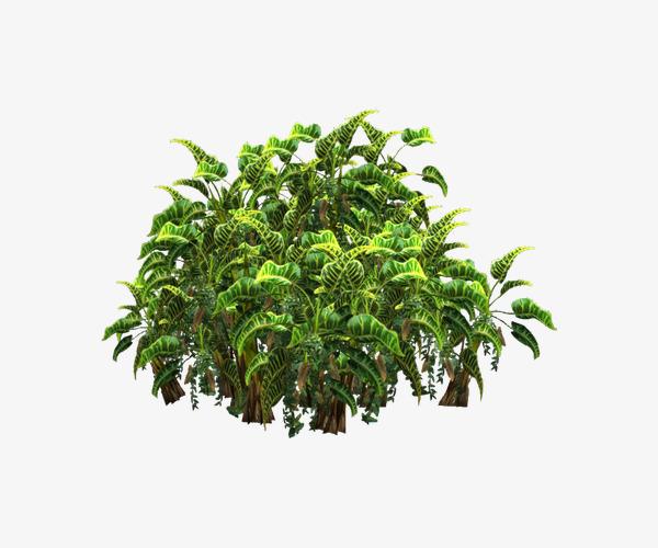 Bush clipart green bush. Bushes plant png image