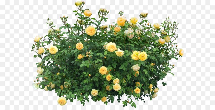 Bush clipart flower. Shrub plant clip art