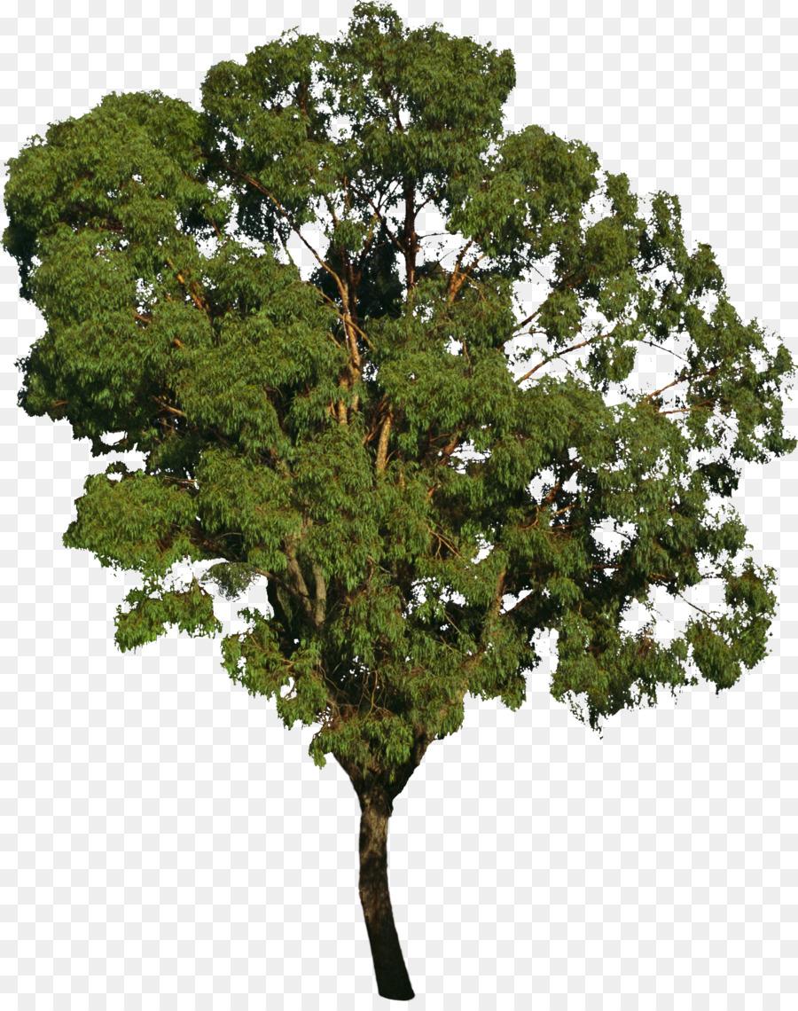 Bushes clipart forest. Tree bonsai deciduous png