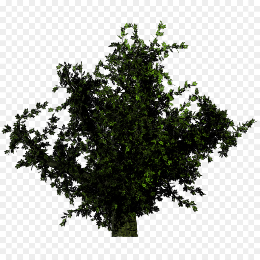 Bushes clipart forest. Tree plant shrub png