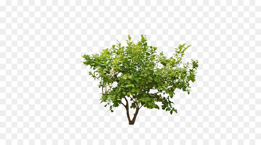Shrub plant clip art. Bushes clipart forest