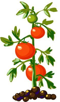 Potted plant clip art. Bushes clipart fruit
