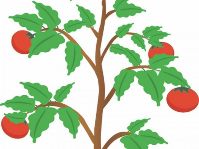 Free download clip art. Bushes clipart fruit