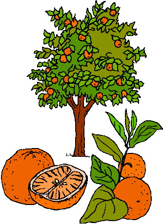 Tree clipart food. Free cliparts download clip