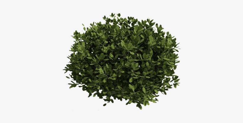 Bushes clipart green bush. Png