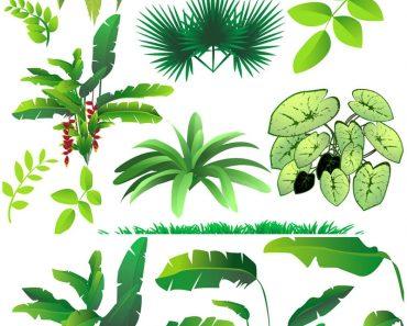 Bushes clipart jungle. Fresh pencils gallery digital