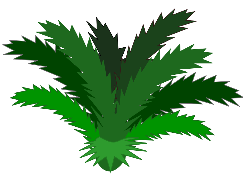 Bushes clipart jungle. Free plant cliparts download