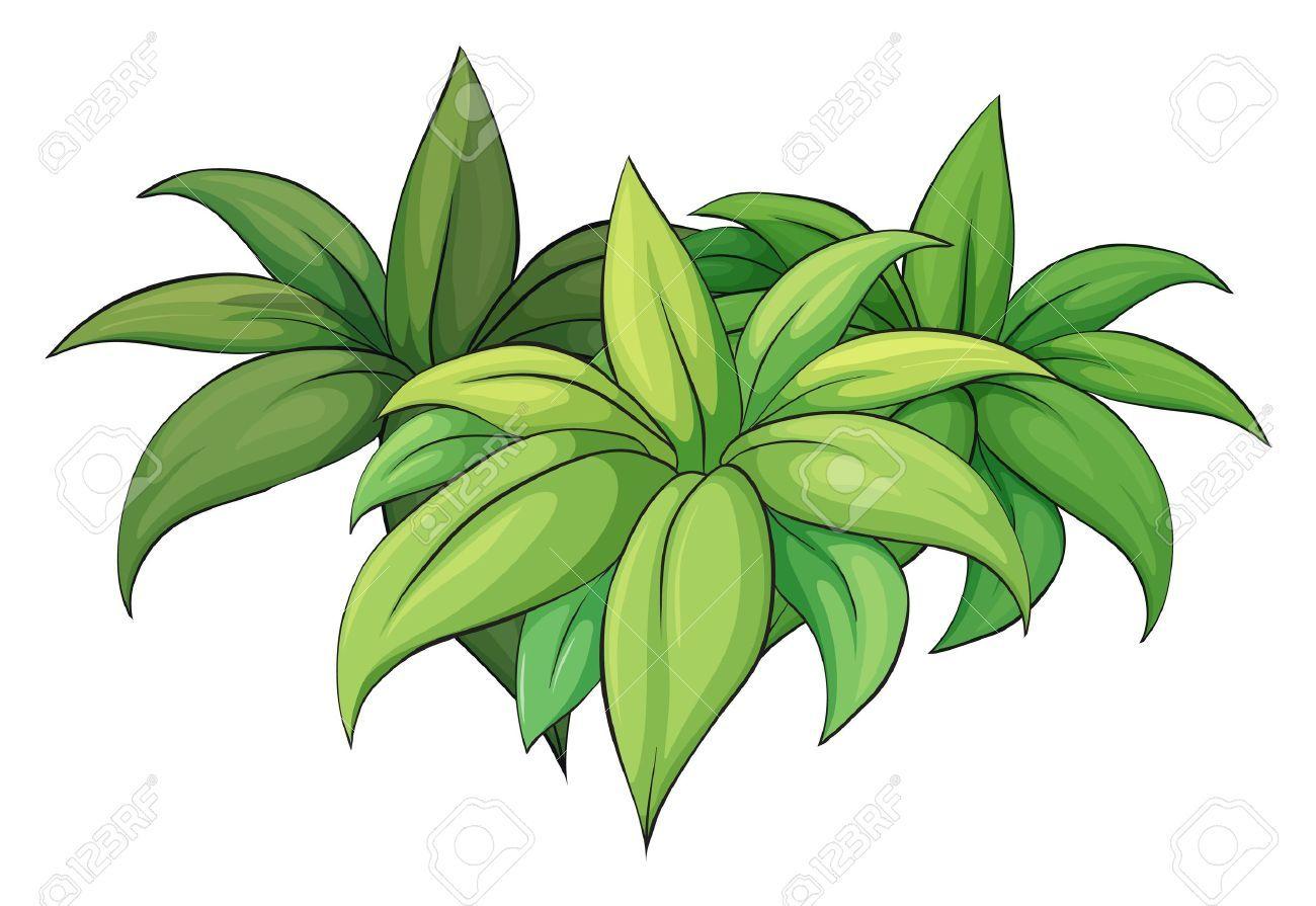 Bushes clipart jungle. Image result for images