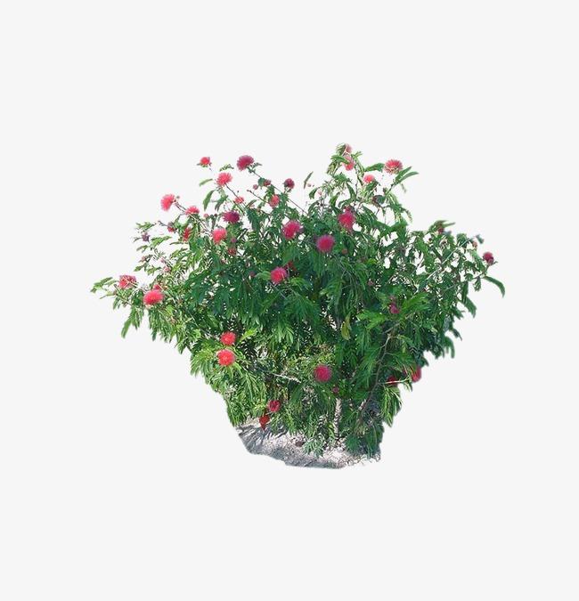 Plants garden flowers png. Bushes clipart landscape