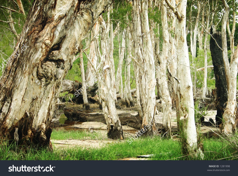Bushes clipart landscape. Australian bush clipground