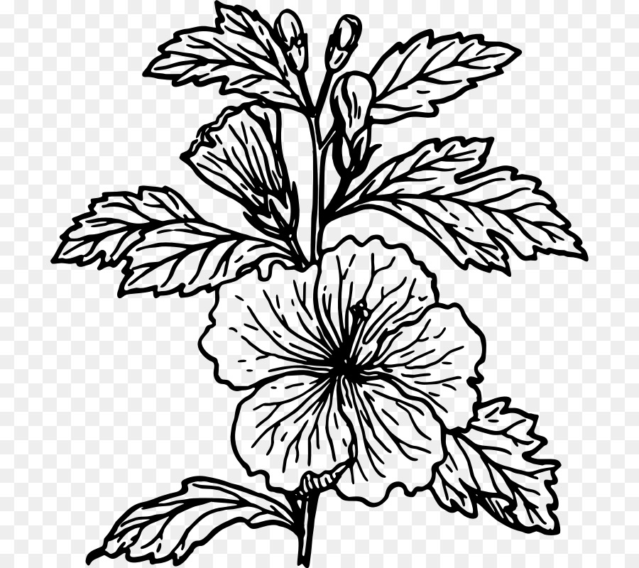 Bushes clipart line drawing. Black and white flower