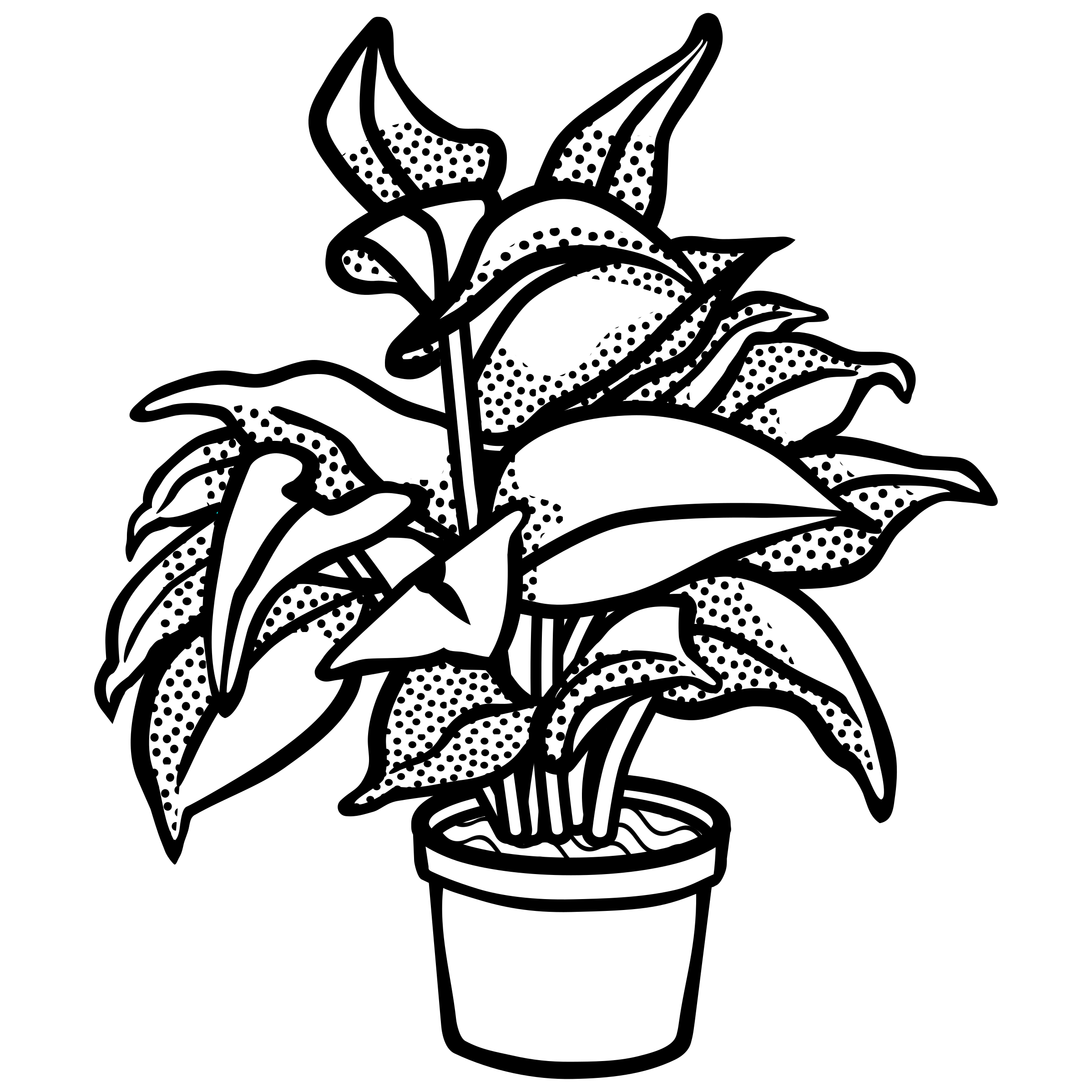 Plant drawing black and. Poppy clipart potplant