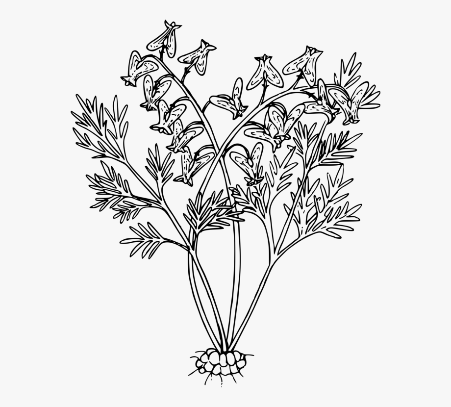 Wildflower black and white. Bushes clipart line drawing