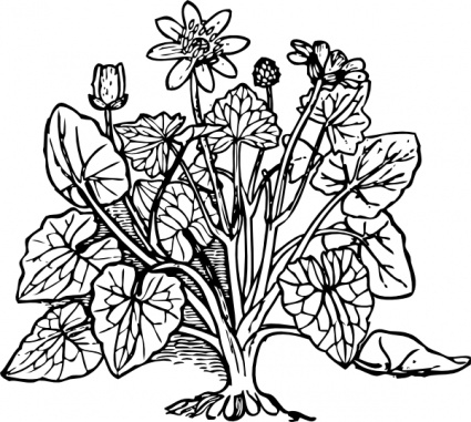 collection of flowering. Bushes clipart outline